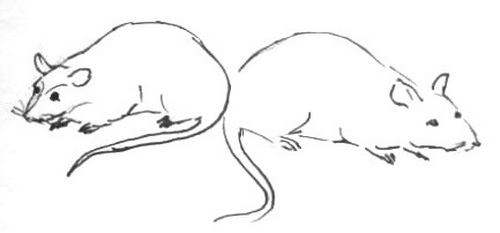 Рисунок - мышки