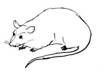 Рисунок Мышь