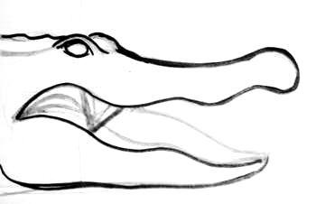 Рисуем голову крокодила