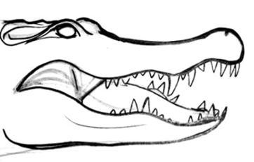 Рисунок голова крокодила.