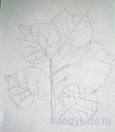 Ветка липы с листьями