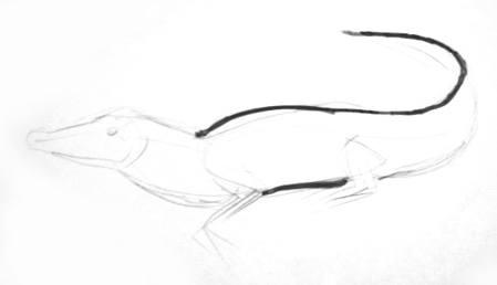 Рисуем крокодила поэтапно