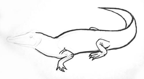 Нарисуем крокодила поэтапно
