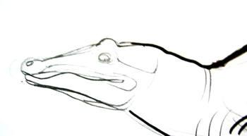 Нарисуем голову крокодила