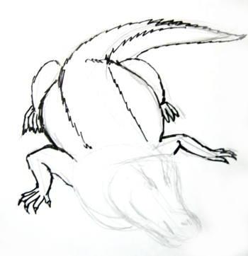 Нарисуем ползущего крокодила