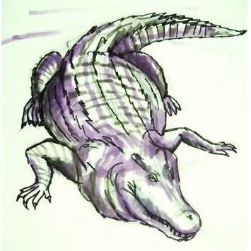 Рисунок крокодил 13