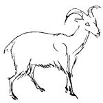 Как нарисовать козла и барана поэтапно