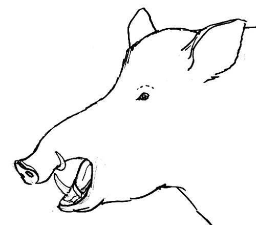Рисунок -голова кабана в профиль