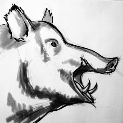 Рисунок головы кабана в профиль