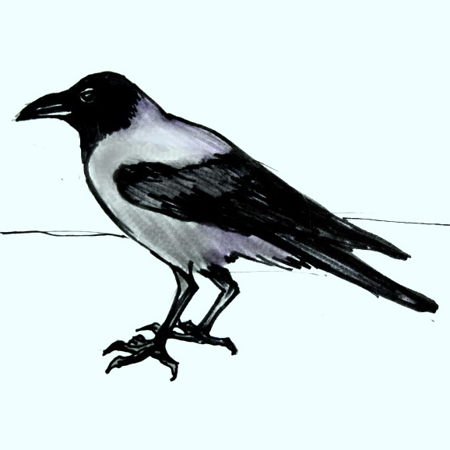 Рисунок Ворона