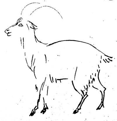 Рисунок козла