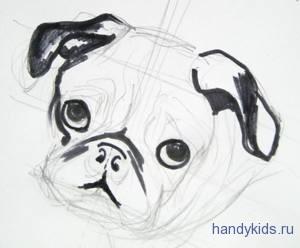 Как нарисовать мордочку мопса