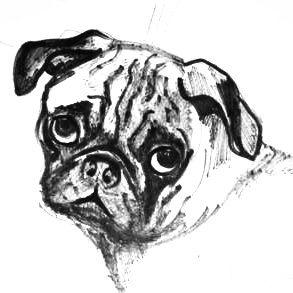 Голова мопса рисунок