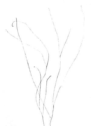 Наметим стебли незабудки