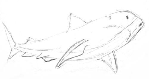 Акула -набросок карандашом