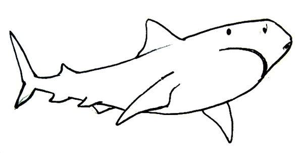 Цветной рисунок акулы.