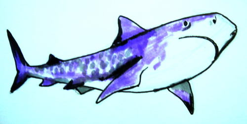 Цветной рисунок Акула