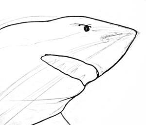 Морда акулы -поэтапный рисунок