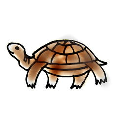 Рисунок черепаха