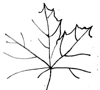 Поэтапный рисунок листа  клёна
