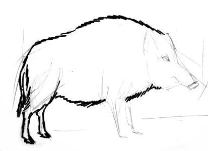Рисуем кабана поэтапно