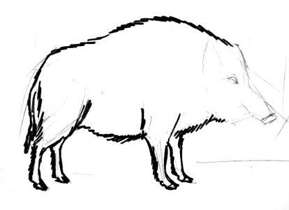 Нарисуем кабана