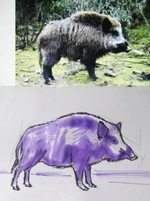как нарисовать Кабана