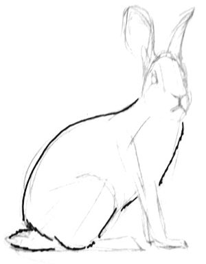Нарисуем туловище зайца