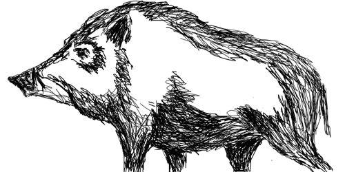 Рисунок кабан(секач)