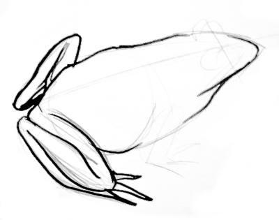 Нарисуем лягушку поэтапно
