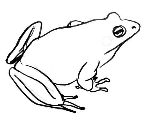Рисунок лягушка