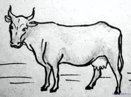 Рисунок стоящая корова