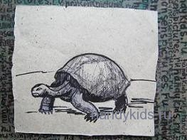 Рисунок черепаха 3