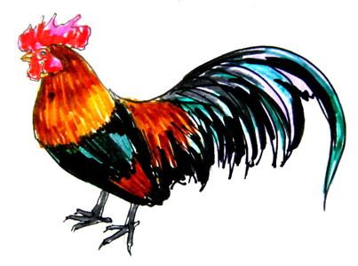 Цветной рисунок Петух