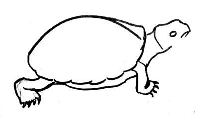 Нарисуем черепаху