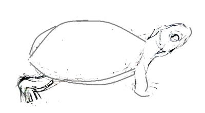 Рисование черепах