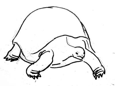 Рисунок черепаха 13