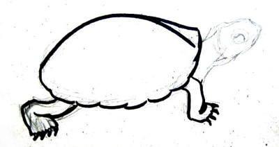 Рисуем панцирь и лапы черепахи