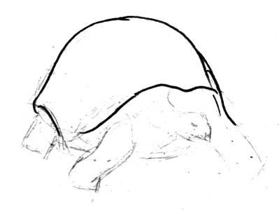 Рисунок панцирь черепахи