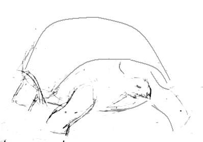 Эскиз черепахи