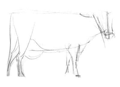 Карандашный эскиз коровы