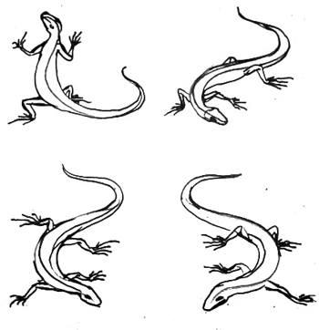 Ящерицы рисунок
