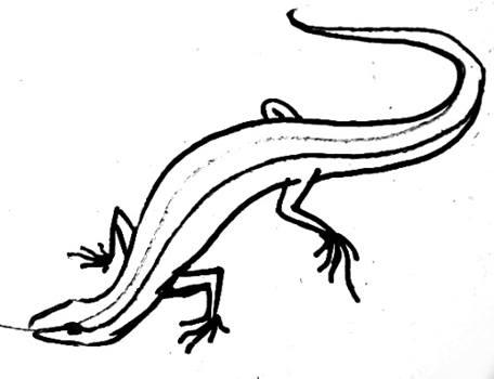 Ящерица рисунок
