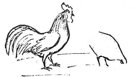 Рисуем петуха и курочку