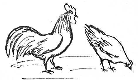 Петух и курица рисунок