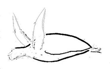 Морская черепаха -вид сбоку