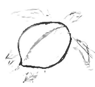 Рисуем морскую черепаху