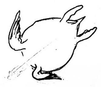 Пошаговое рисование морской черепахи