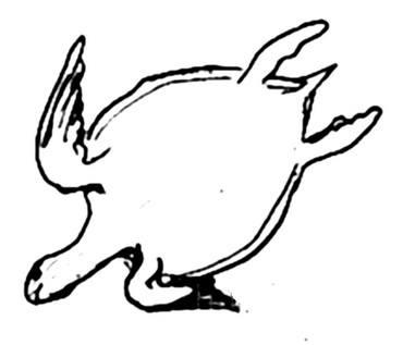Рисунок Морская черепаха - вид снизу