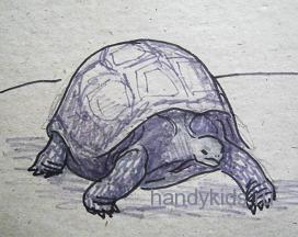 Рисунок  черепаха 2